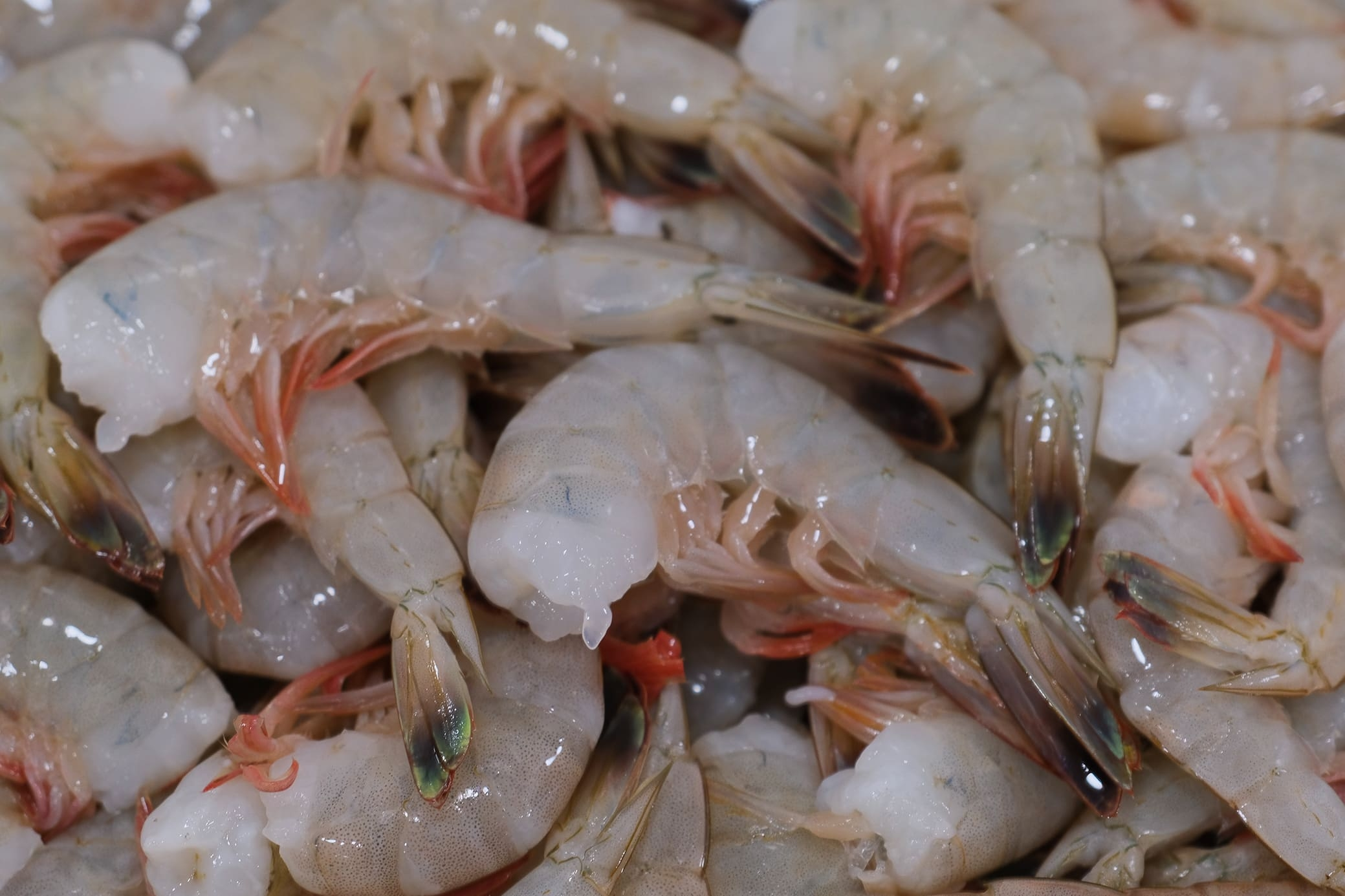 Fresh From Florida white shrimp caught off Ponce Inlet by a local shrimper